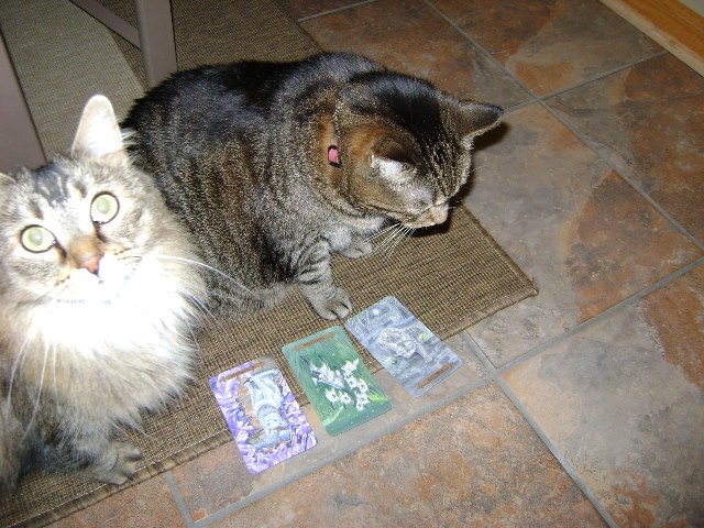 Beulah and Buckley play with the Mystical Cats Tarot