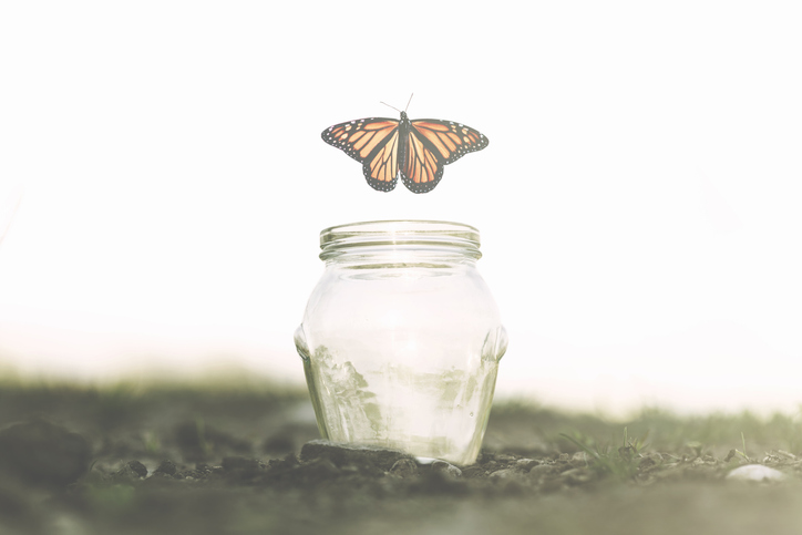 Butterfly and Jar