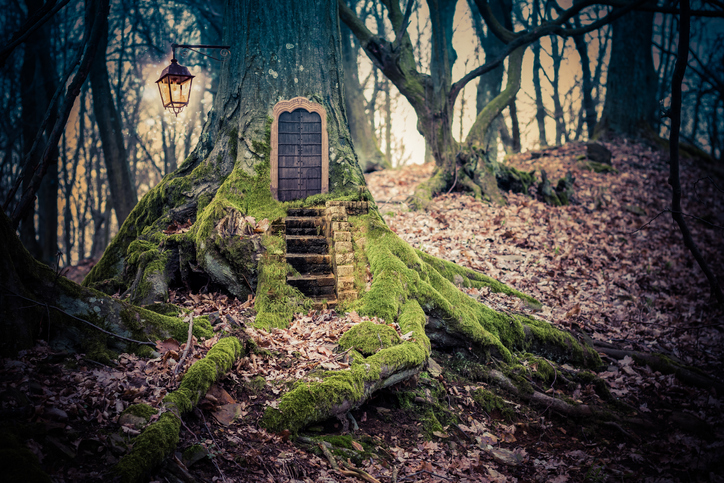 Fairy Home in Forest