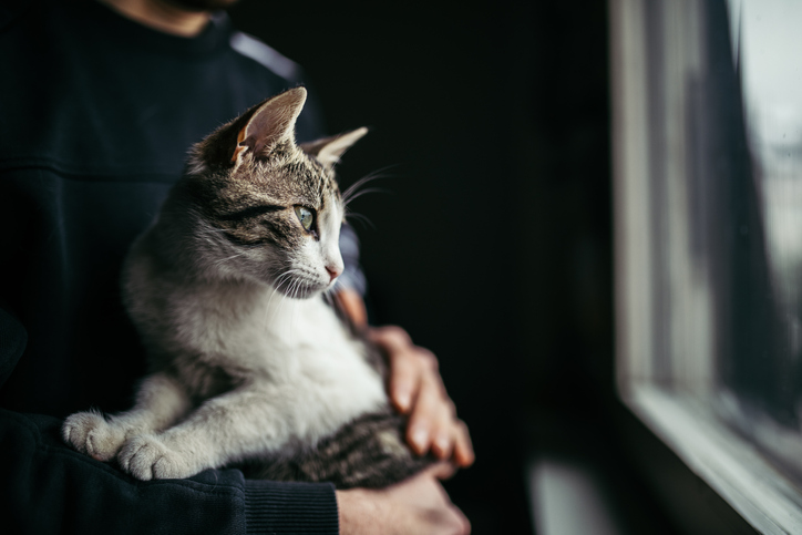 Cat in Man's Arms