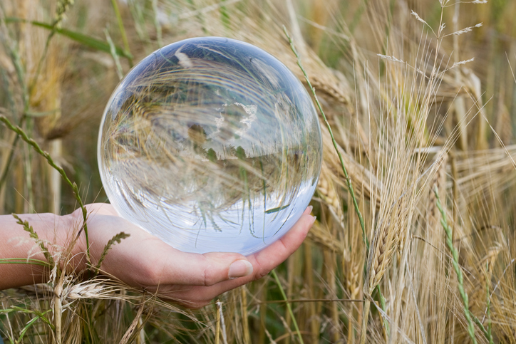 Glass Sphere with Wheat Field