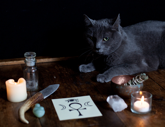 Bosco cat with sigil on altar