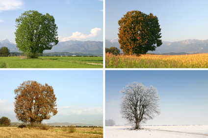 Trees Through the Seasons