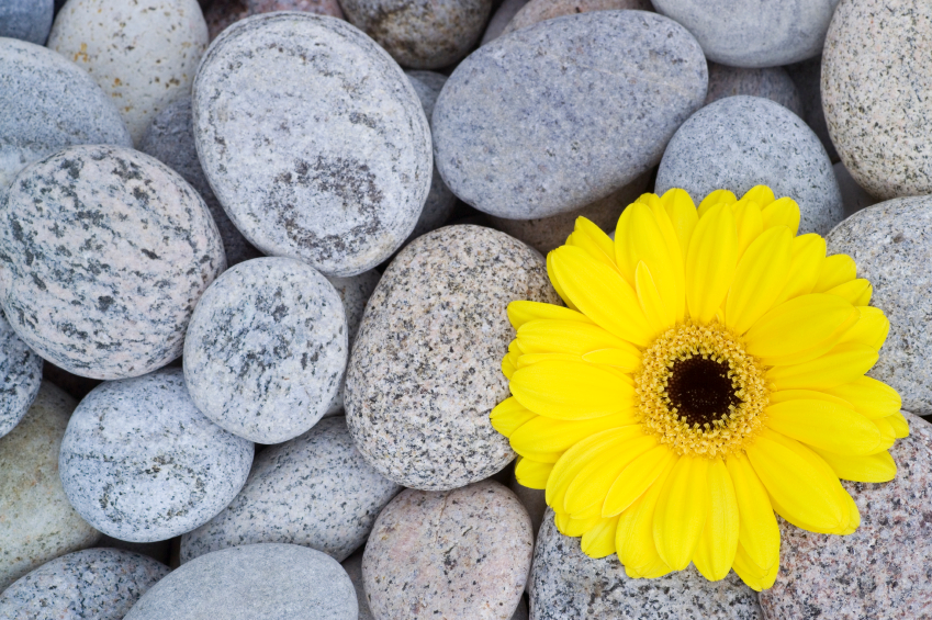flower and stones