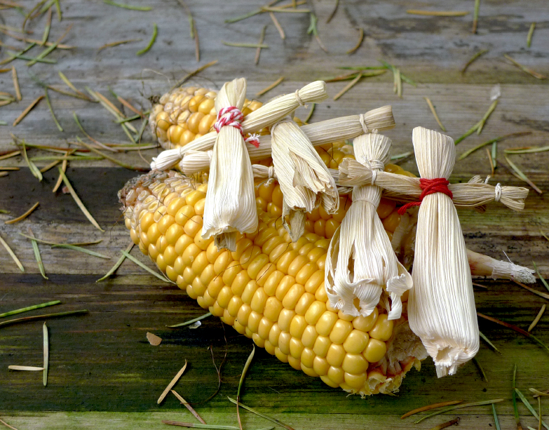 Corn and Autumn Images