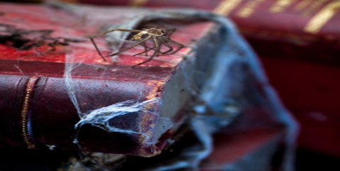 Spider on Old Books