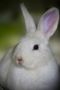 A cute rabbit