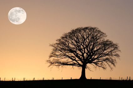 Full Moon and Winter Oak Tree